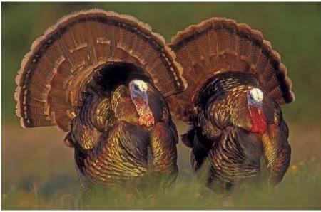 A Traditipnal Thanksgiving Turkey